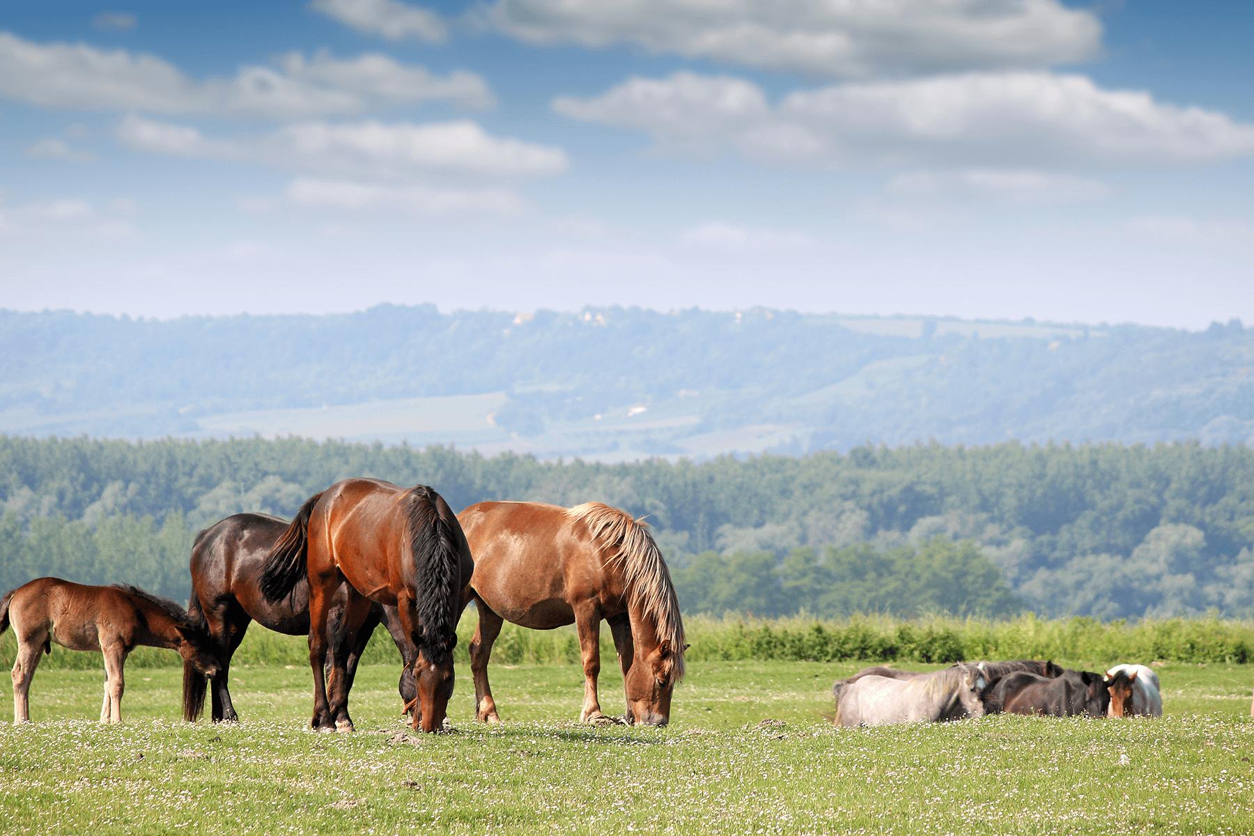 Imparando montare a cavallo