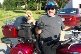 Maltipoo on motorcycle