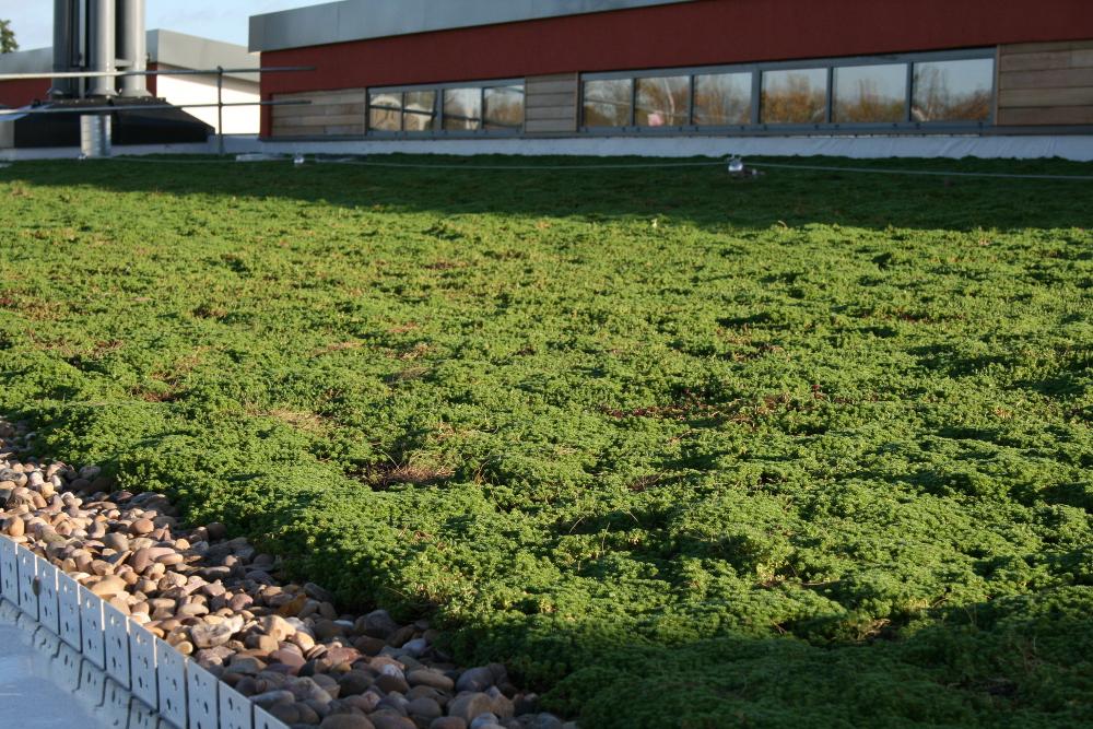 garden roof care