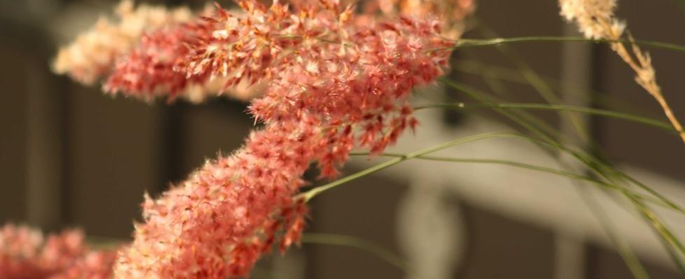 floricoltura casadei