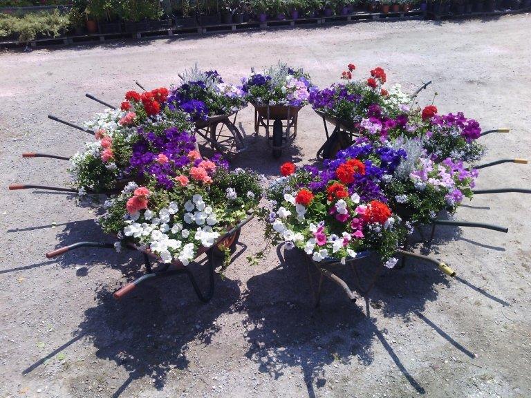 carriole di fiori