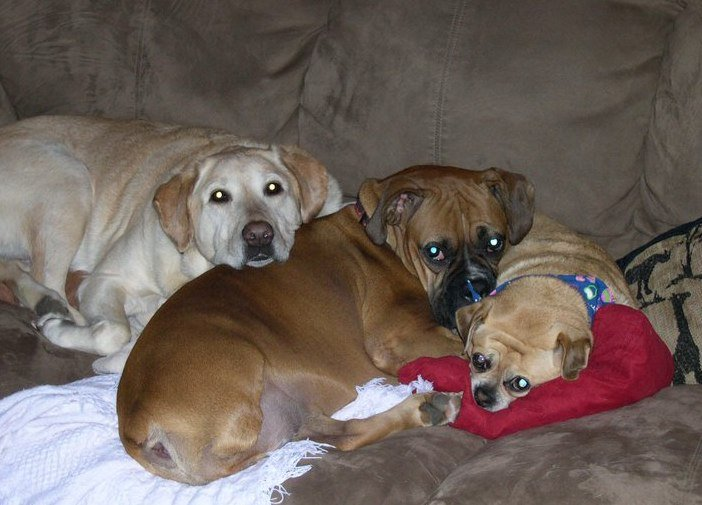 Animal Vet Clinic in Navarre,  FL - Wynn Haven Animal Hospital