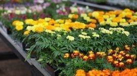 fiori da piantare