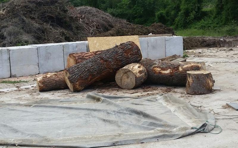legno vergine