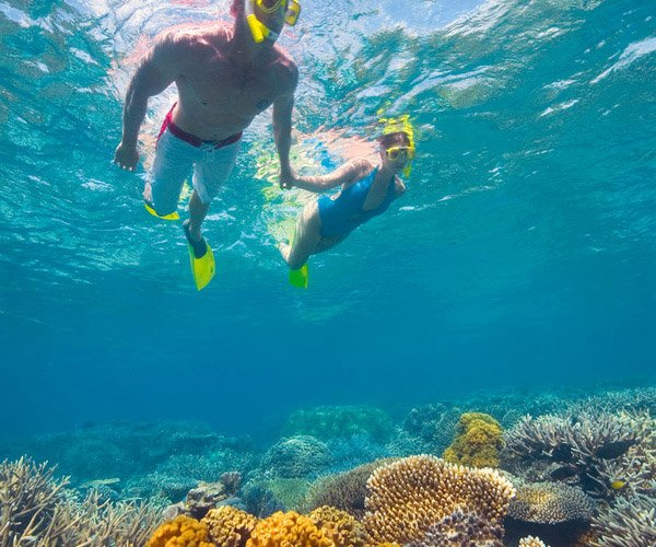 snorkelling on beautiful great barrier reef