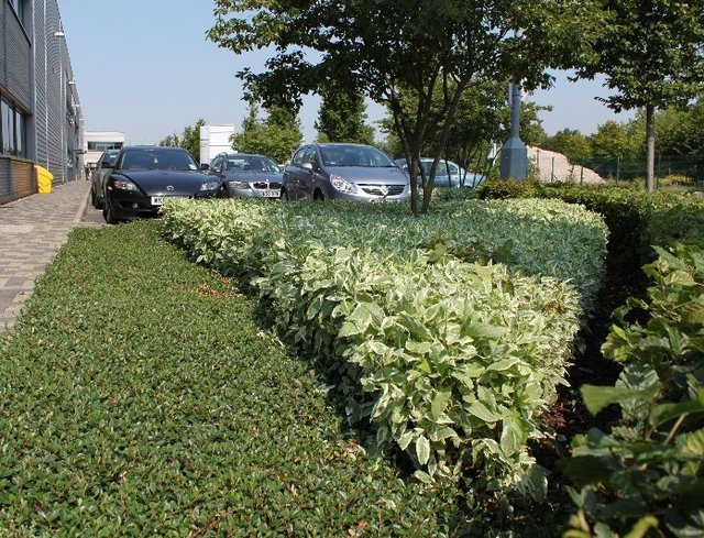 Commercial Grounds Maintenance for Business & Industrial Parks   Valley Landscape Management