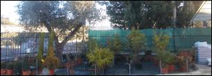 Piante e alberi