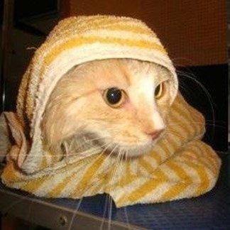 toelettatura gatto