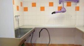servizi per animali domestici, lavaggio gatto, lavaggio cane