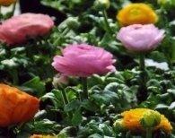 Specializzati in fiori ingrosso