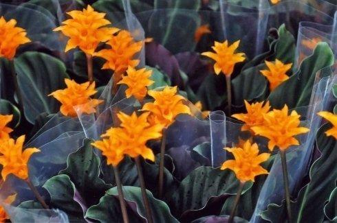 specie piante e fiori