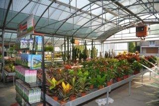 vendita diretta piante