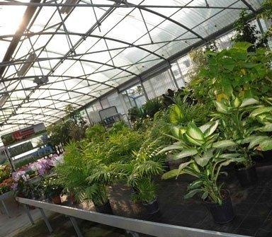 serra piante primaverili