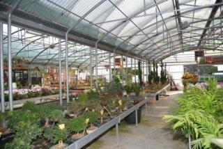 bonsai e piante in vaso