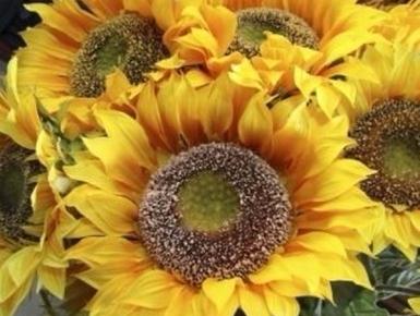 autofunebri, fiori freschi, paramenti