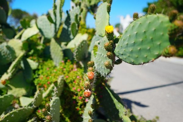 piante verdi