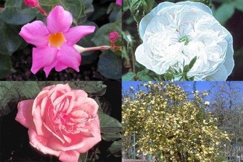 piante da fiore per giardini