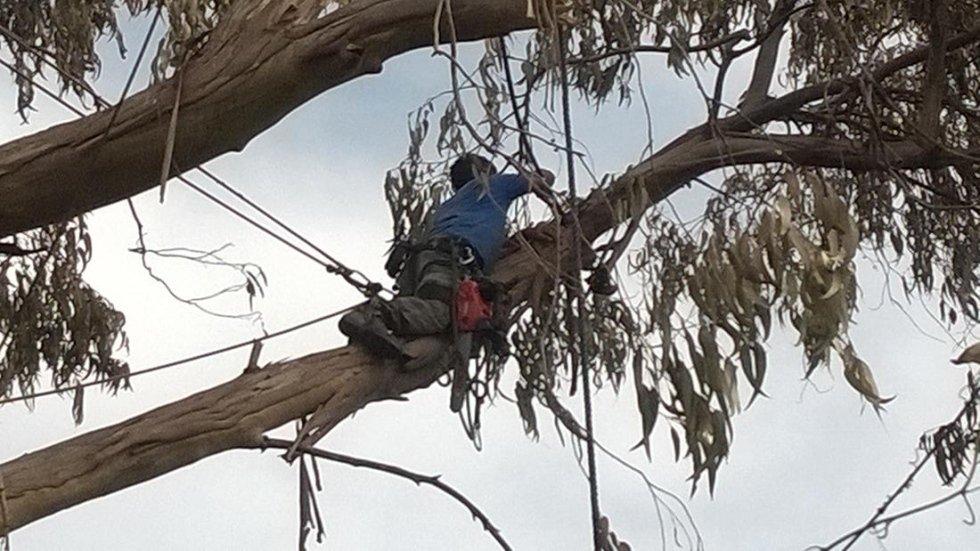 potatura alberi da lungo fusto