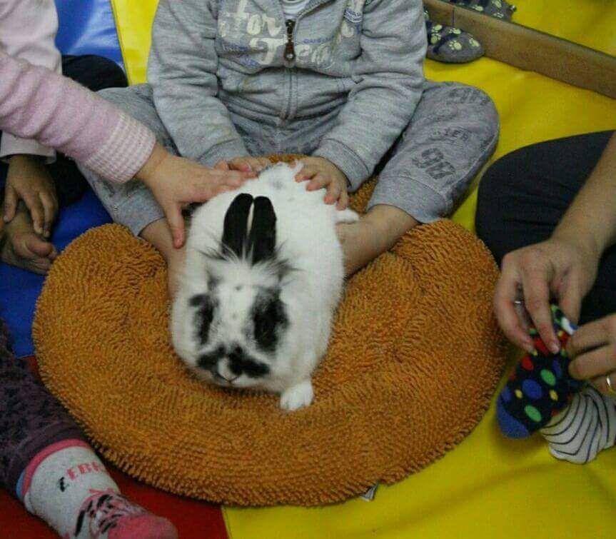 bambino gioca con un coniglio
