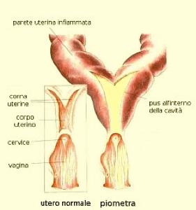 Piometra