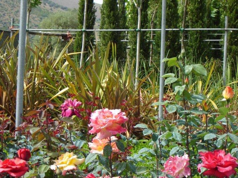 Rose Grandi Fiori