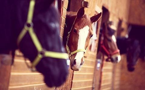 mangimi per cavalli