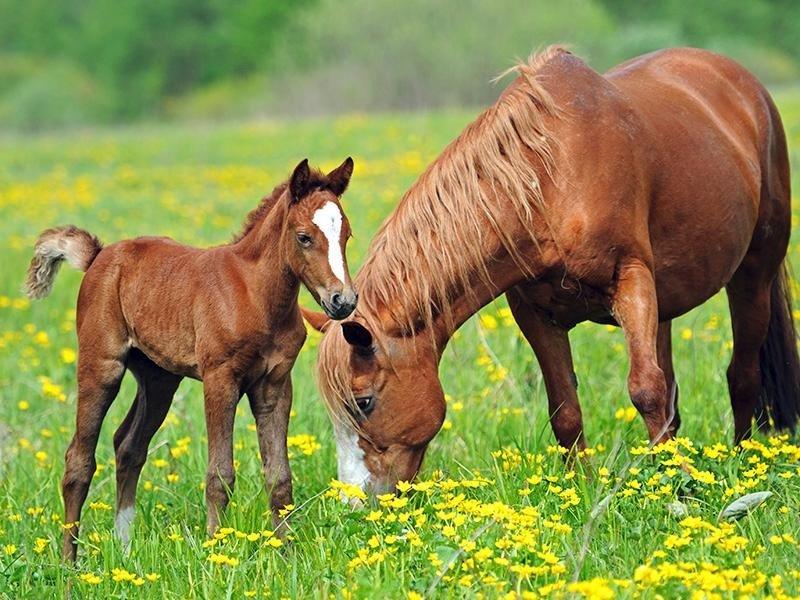 prodotti per puledri e cavalli