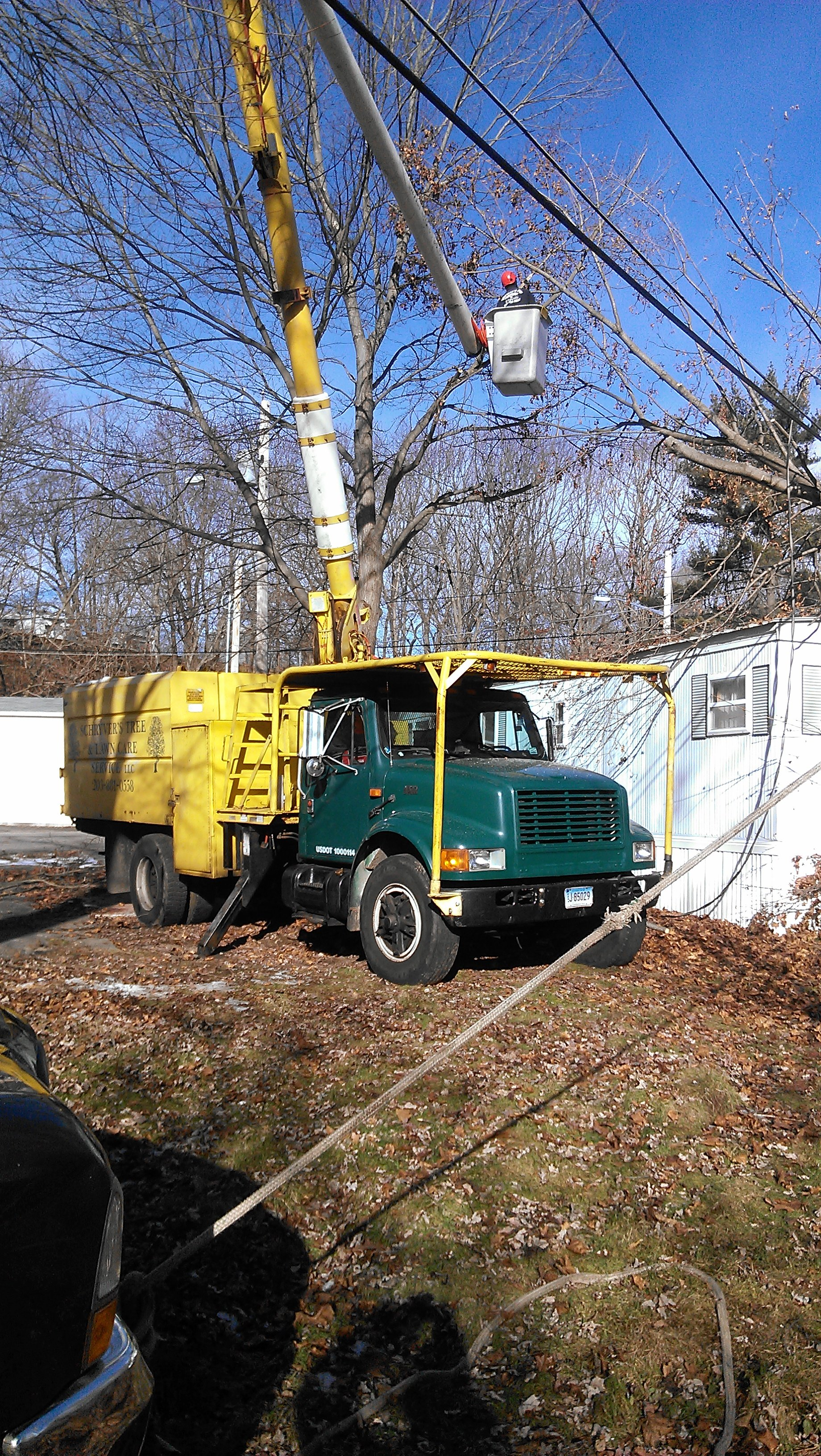 Team member of Schryver's Tree & Landscape LLC providing tree services in Seymour, CT