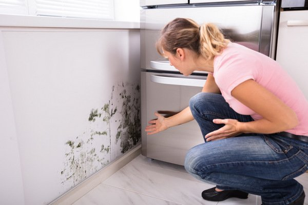 Our Objective Here Is To Provide You With Some Straight Forward And As Importantly Affordable Set Of Steps That Will Ist In Removing Mould Mildew