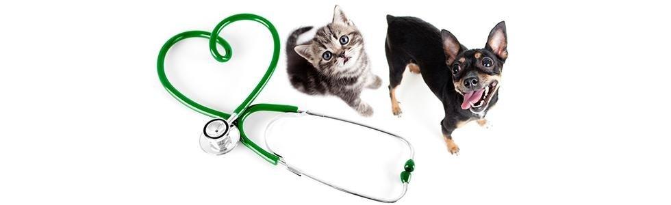un cane un gatto e uno stetoscopio