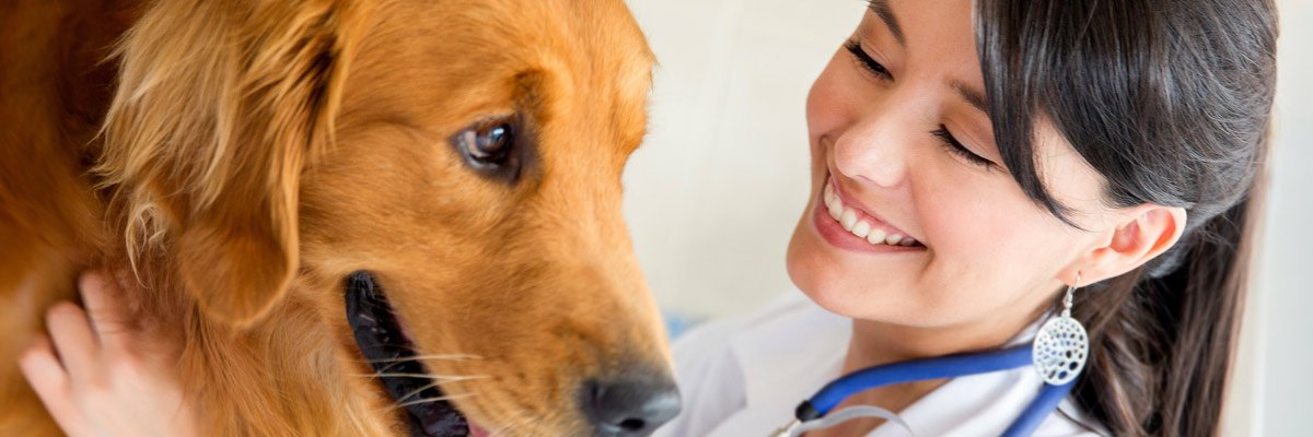dr mustafa veterinary clinic vet examining a dog