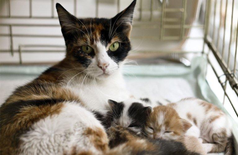 dr mustafa veterinary clinic litter of cats