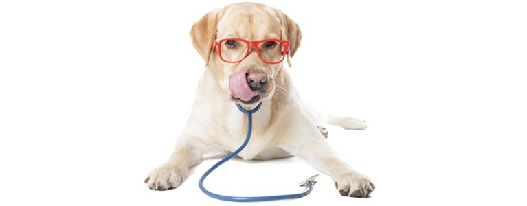dr mustafa veterinary clinic dog with glasses and setescope