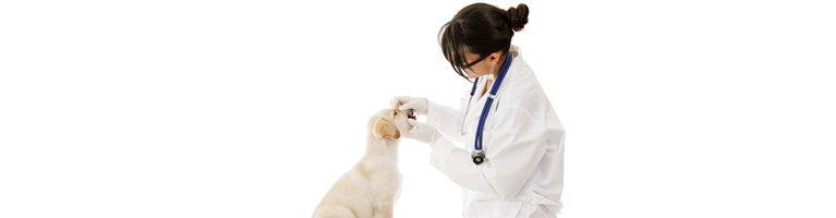 dr mustafa veterinary clinic vet checking dogs teeth