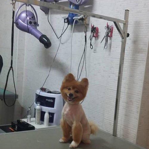 Un cane con pelo marrone appena tosato, seduto sul supporto metallico
