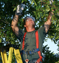 Our team member performing tree services in Onalaska, WI