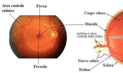 procedura oct