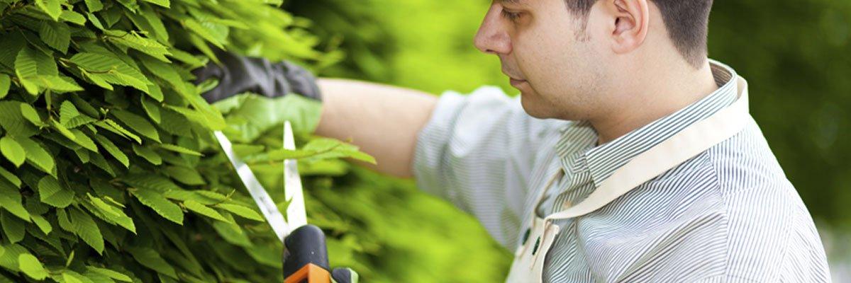 DJ Tree Services service