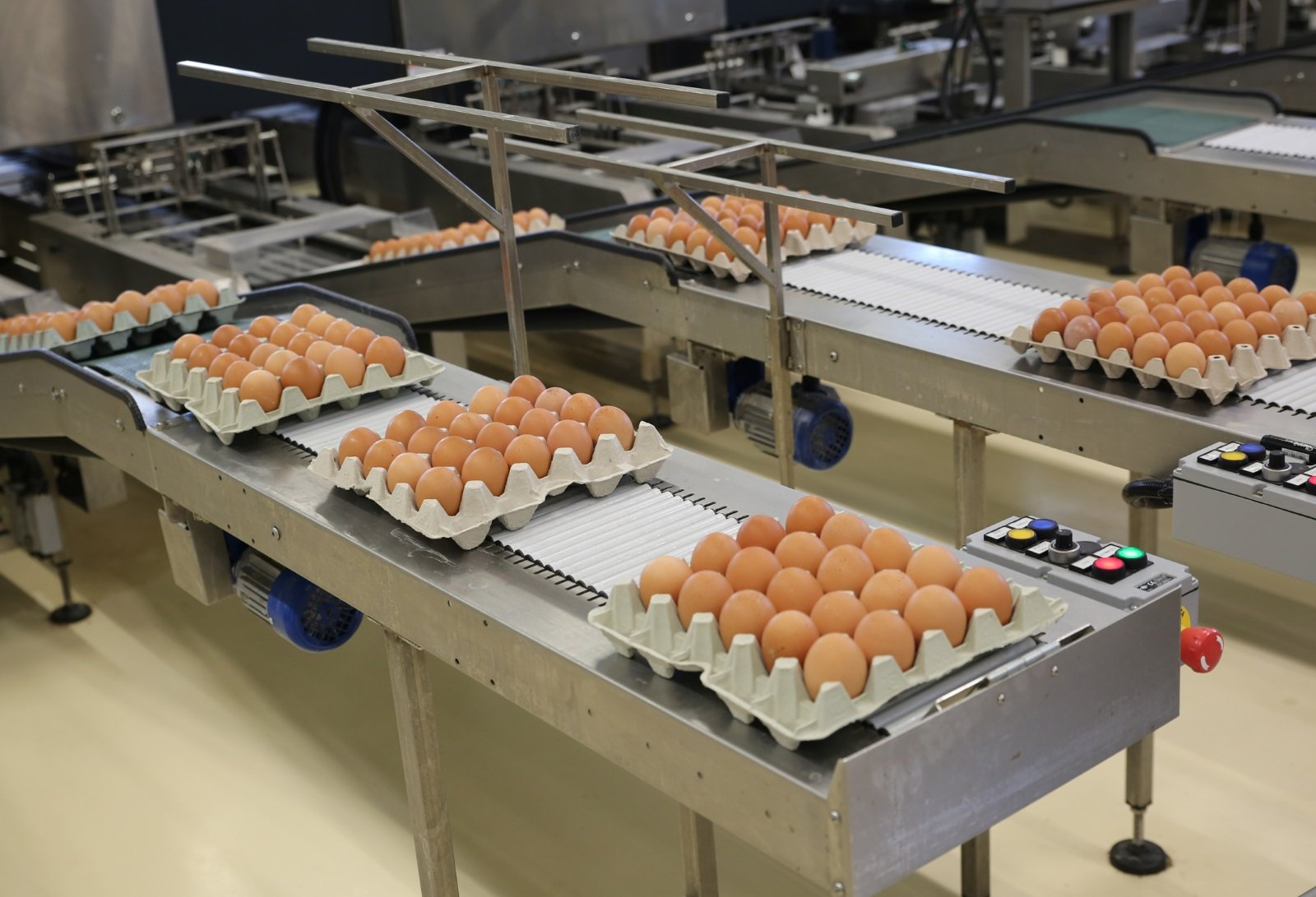 Cartoni per uova che scorrono su nastro trasportatore