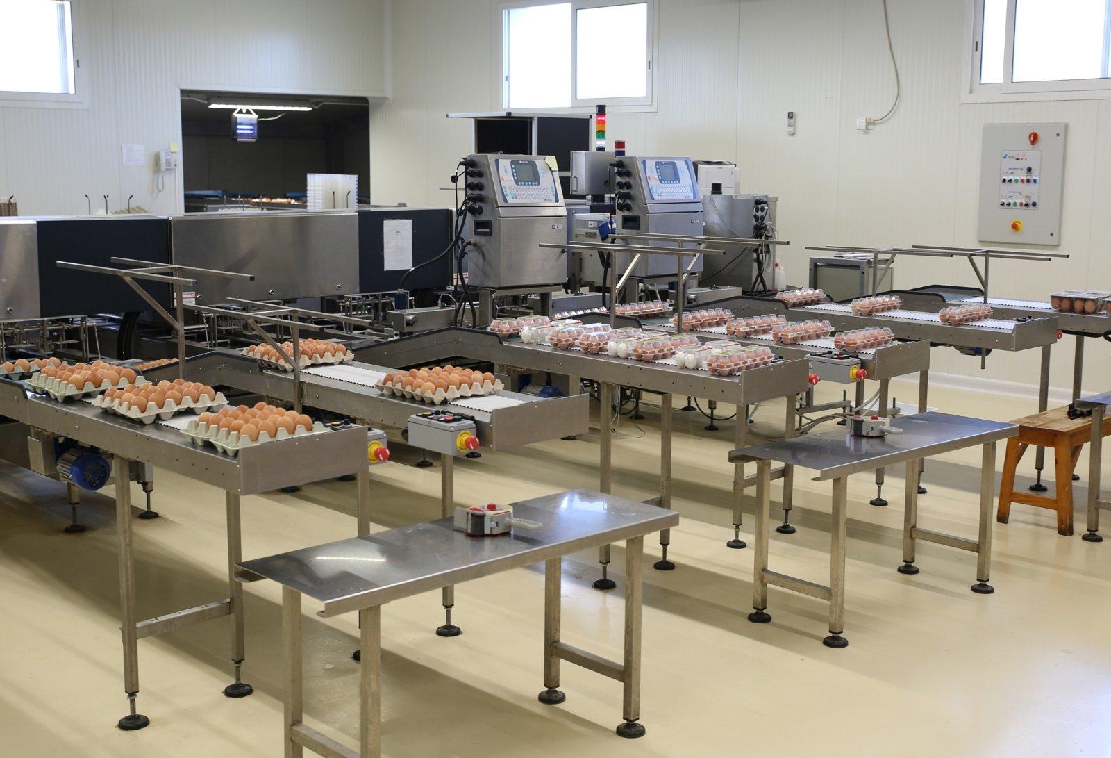 Interno della fabbrica per allevamento uova