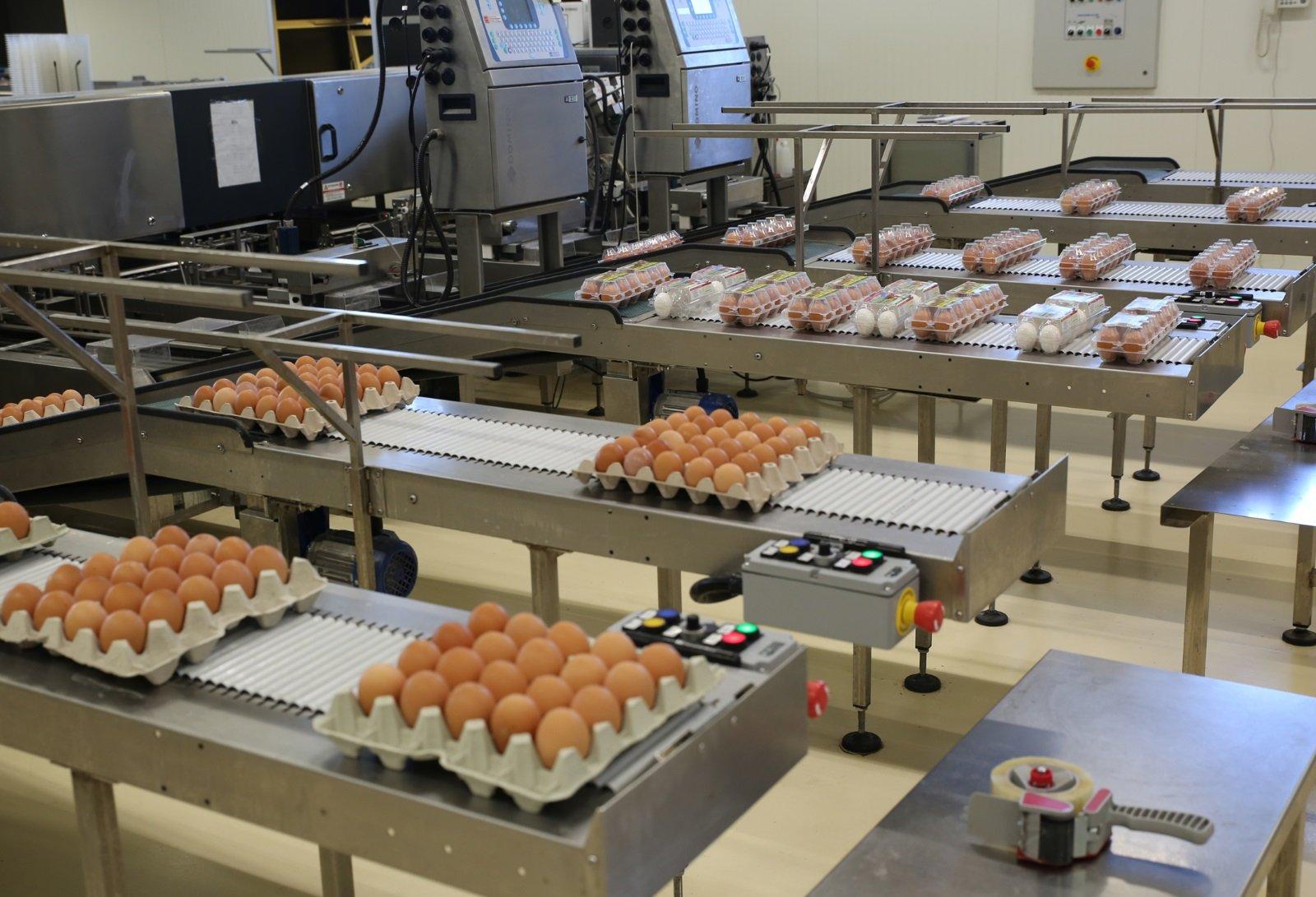 Nastro trasportatore che muove confezioni di uova di diverse dimensioni