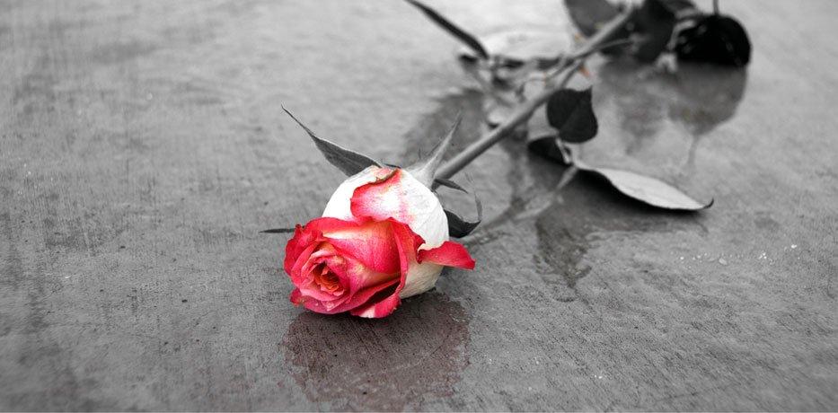 funerali, sepolture, cremazioni