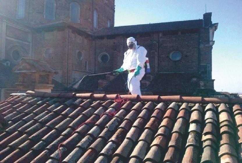 Pest Control ambiente urbano