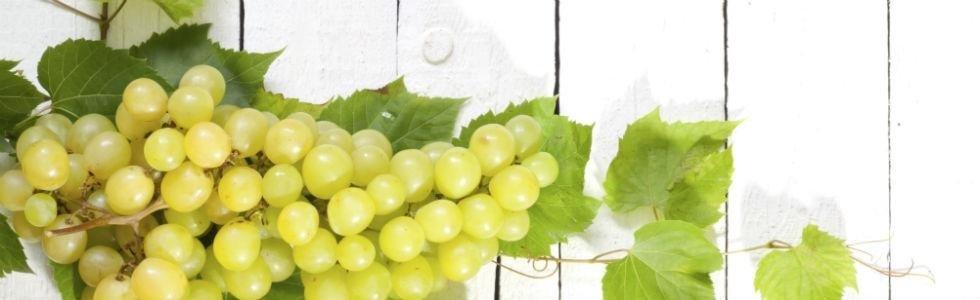 Commercio uva
