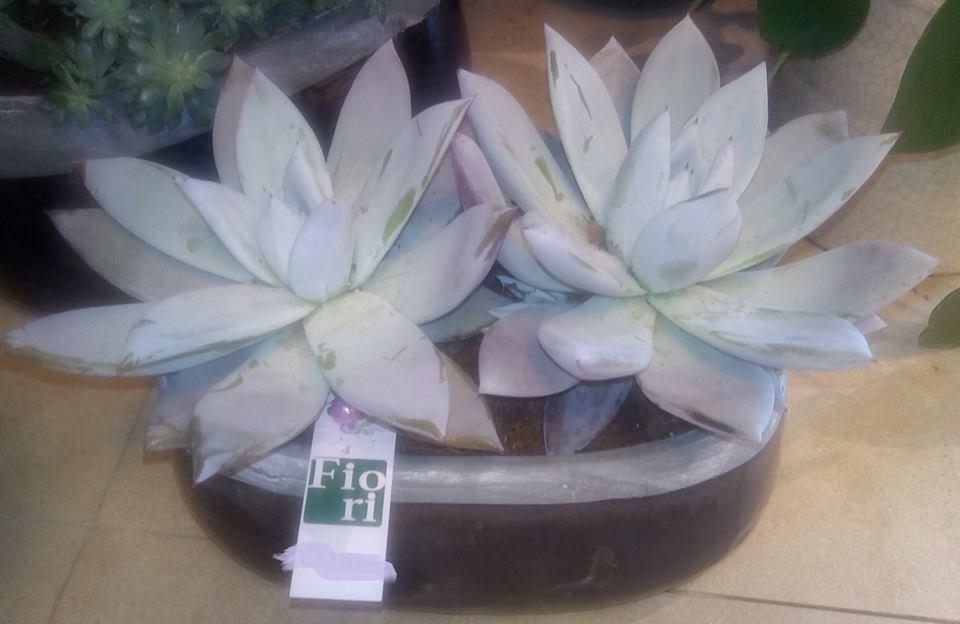 vaso in ceramica di Faenza con fiori