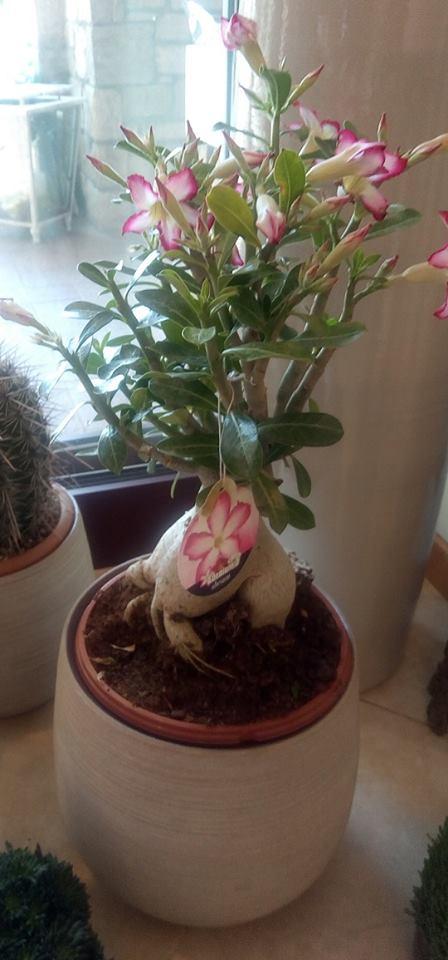 vaso composizione floreale