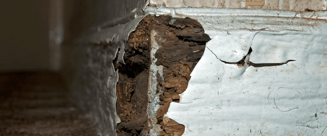 dry rot control