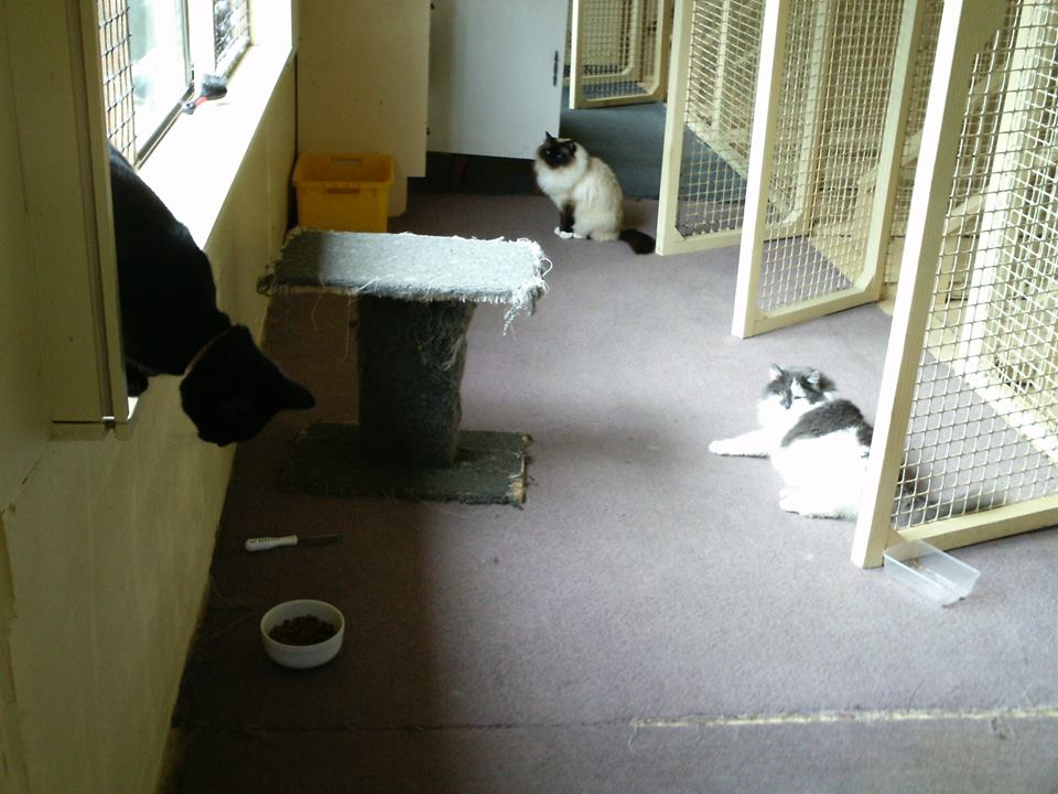 Friendly & caring pet care center