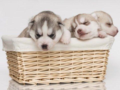 cuccia cani