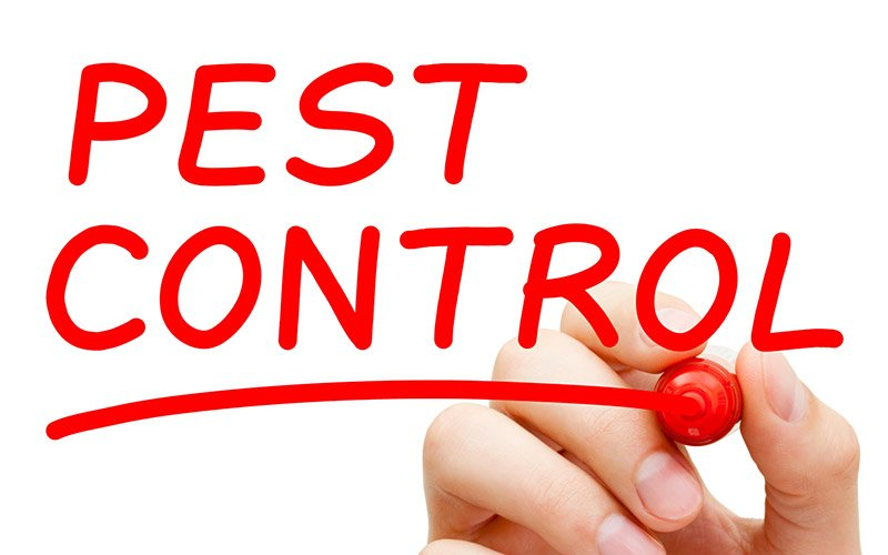 Effective Pest and Weed Control Services in Clare